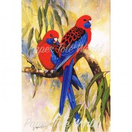 GR Crimson Rosellas