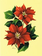 Poinsettia by Reina