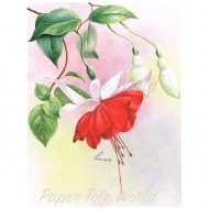 Red Fuchsia1