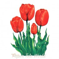 SSmall Red Tulips