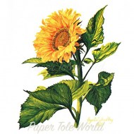 SSmall Sunflower